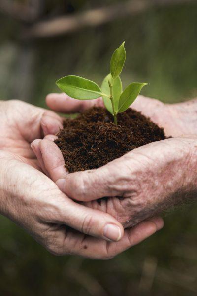 environmental-conservation-plant-sustainability-P9QCM9H